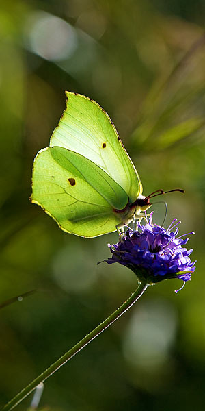 picture of a butterly to illustrate eco-friendly holidays at valley view hq