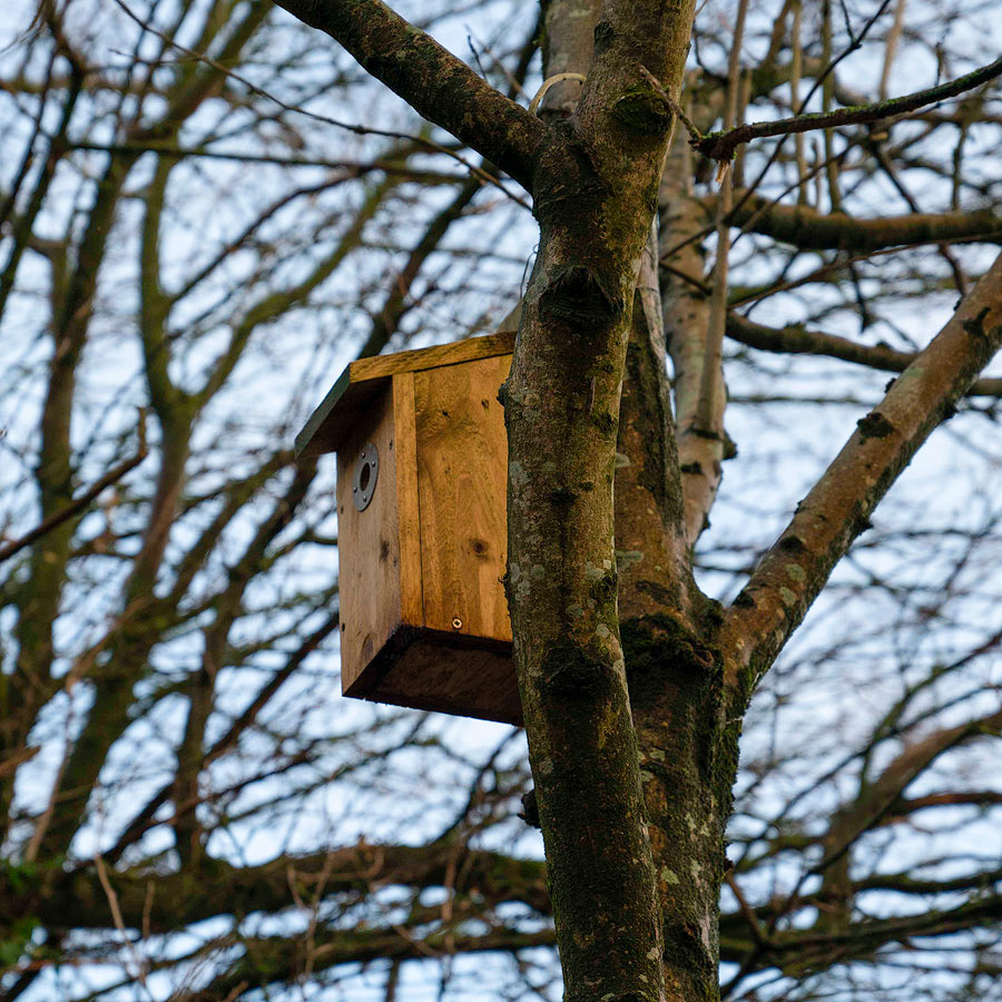 build a bird box courses at valley view hq